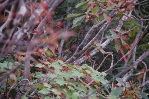 小遠見の鳥