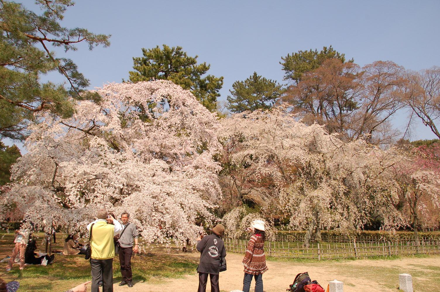 桜と邪魔な連中