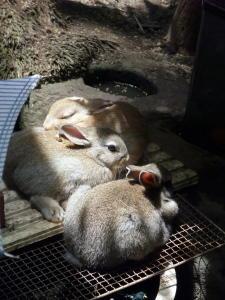 お昼寝;ちびママの子