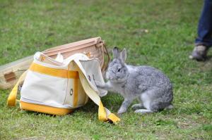 久々のウサギ in 御苑