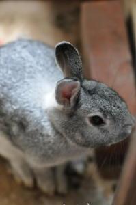 我思う、故に我ウサギ