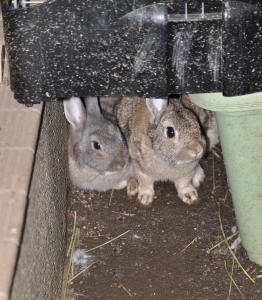 小屋の下の潜む二人