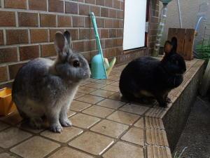ウサギ並び