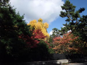京都御苑の紅葉(1)