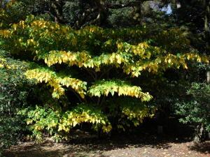 京都御苑の紅葉(2)