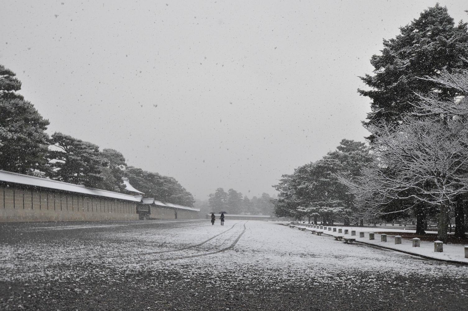 雪降る御苑