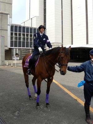 京都府警騎馬隊