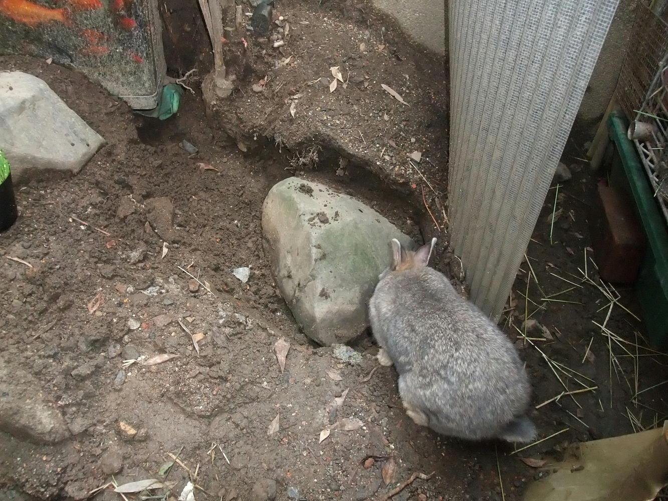 台風で陥没した庭石