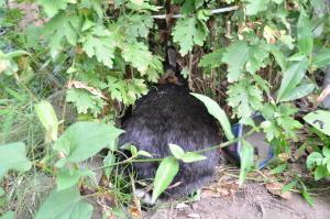 新潟2010;ウサギ-1