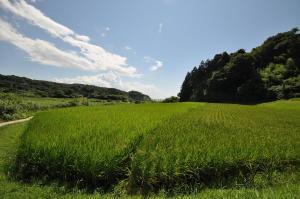 2010新潟;青田