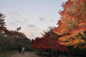紅葉2010;万博記念公園-9