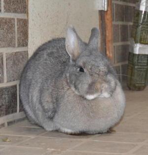 寒い日のウサギは丸い