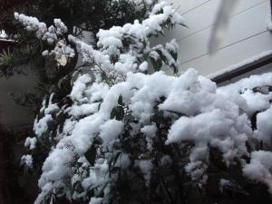 雪0304
