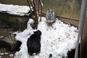 雪ウサギ その2
