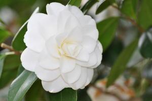 御苑桜2011-20(4/16)