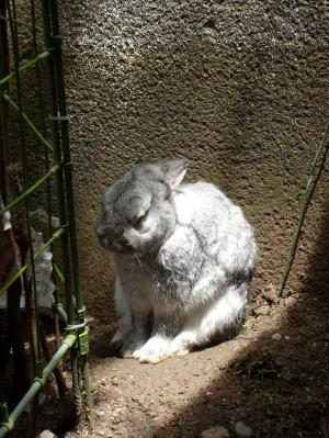恍惚とひなたぼっこをするウサギ