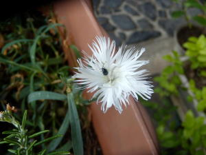 花にいる虫は蜂だけとは限らない