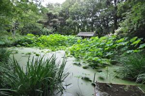 トンボ池;全景