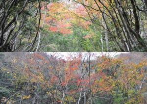 天滝の紅葉