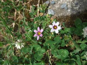 5ミリの花