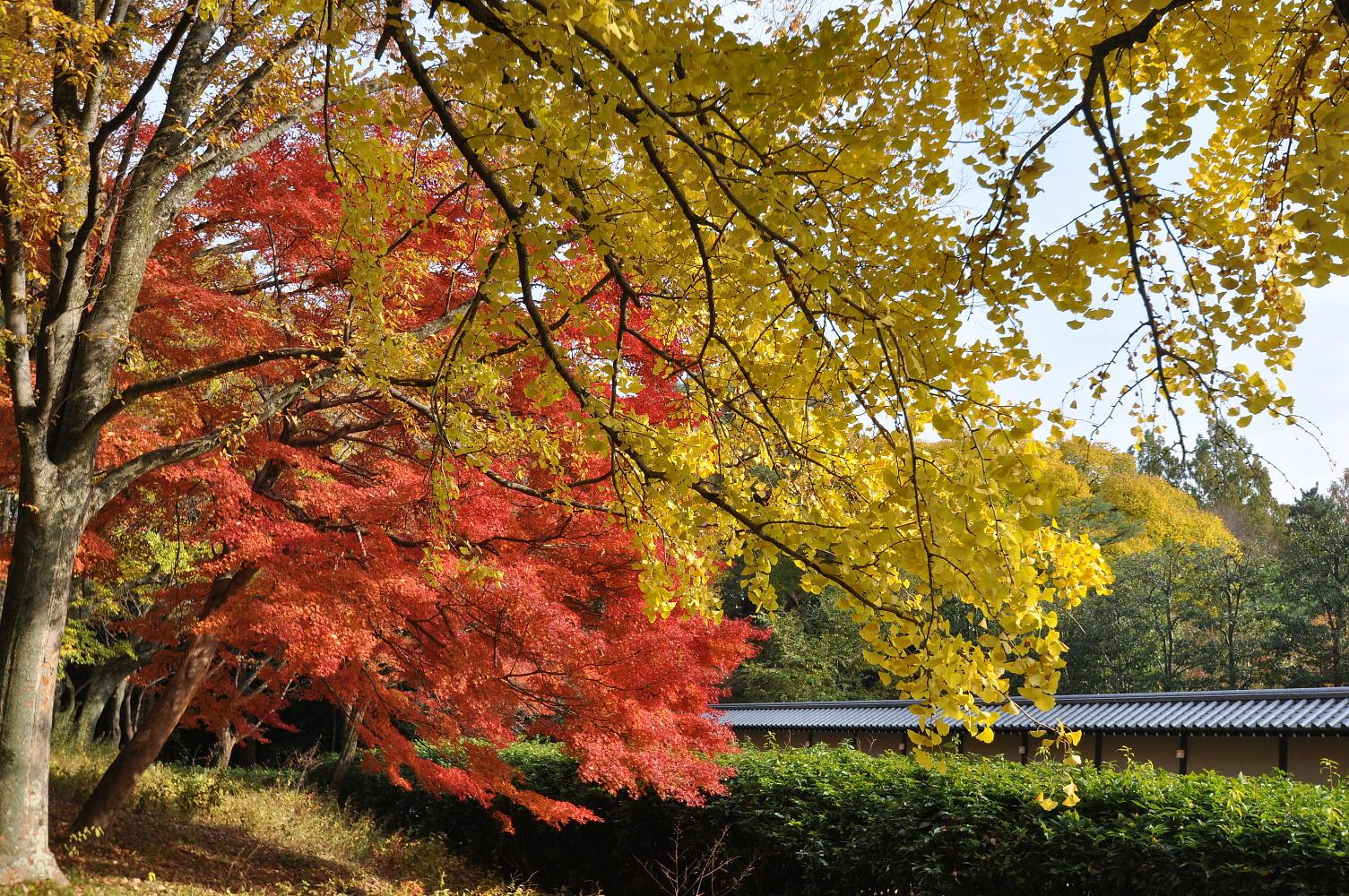 京都の紅葉2012-9