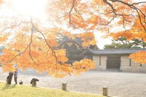 京都の紅葉2012-11