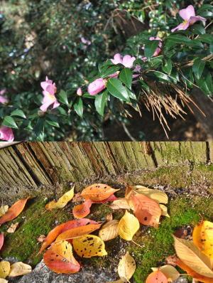 京都の紅葉2012-12