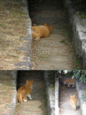 ある日の猫