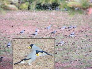 今頃の御苑にいる鳥シリーズ、その5。