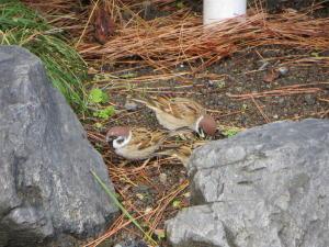 今頃の御苑にいる鳥シリーズ、その11。