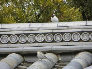 今頃の御苑にいる鳥シリーズ、その15