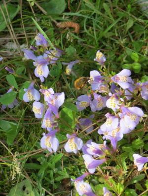 小さな紫色の花