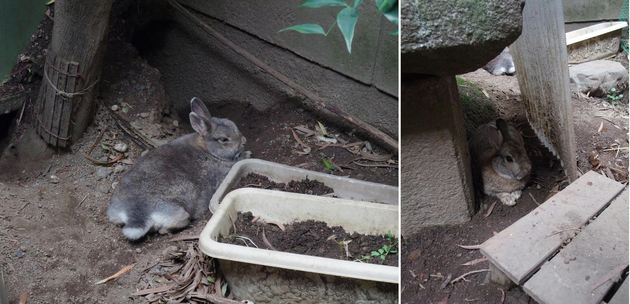 ウサギも暑い