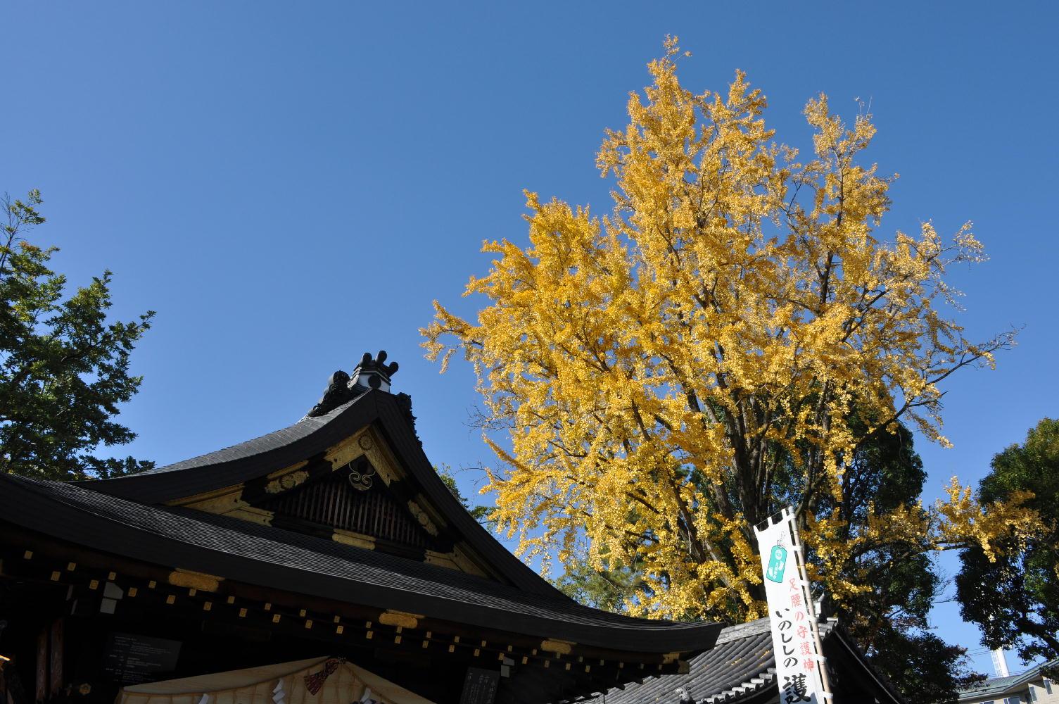 護王神社さんの紅葉