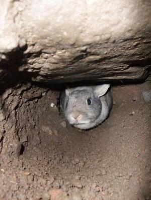トンネルの中からlこんにちわ