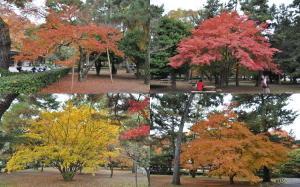 京都御苑紅葉2010-1