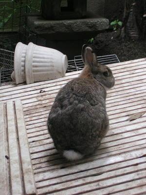 ウサギ、思う