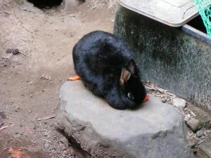 ウサギはやっぱりにんじんが好き