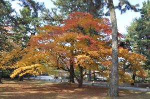 京都の紅葉2012-2