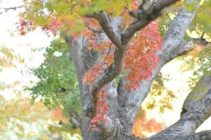 京都の紅葉2012-4