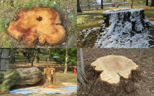 枯れる木々