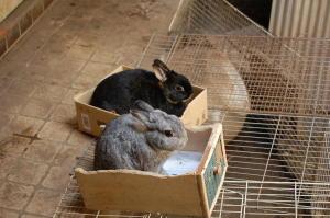 ウサギ一戸建て