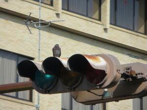 鳩 on the 信号