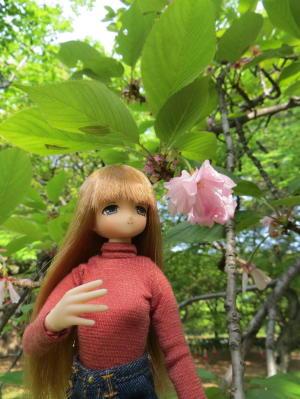 みあちゃんと桜