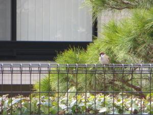 雀 on フェンス